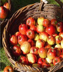Äpfel im Schloss Château du Breuil